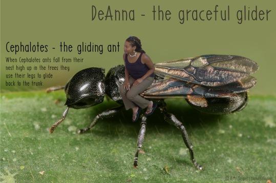 deanna_cephalotes_c