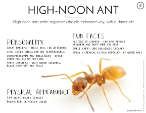 06_High Noon Ant-01