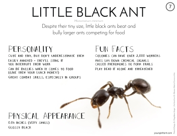 07_Little Black Ant-01