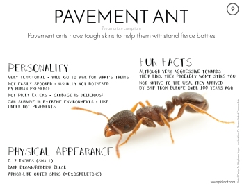 09_Pavement Ant-01