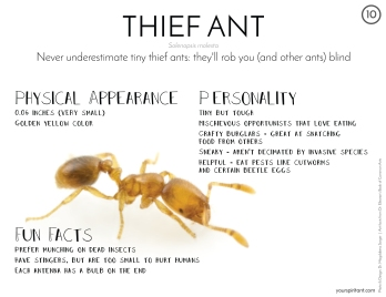 10_Thief Ant-01