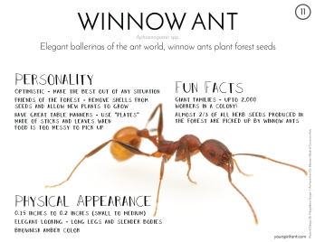 11_Winnow Ant-01