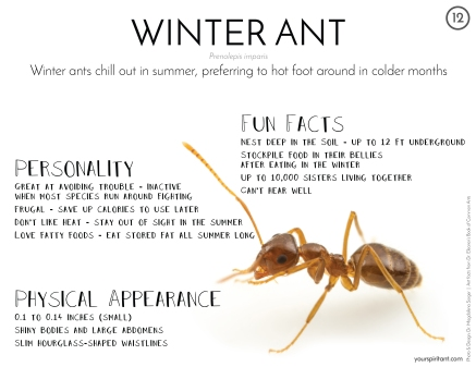 12_Winter Ant-01