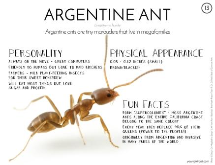 13_Argentine Ant-01
