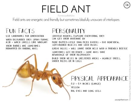 14_Field Ant-01