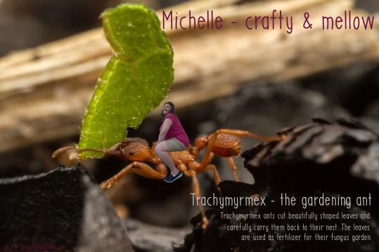 michelle_trachymyrmex_c
